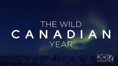 The Wild Canadian Year