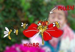 What is pollination and how does it work?