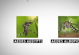 ​​Zika Virus: A World Health Emergency