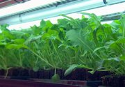 Hydroponic farming looks to offer food stability across Canada