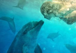 Conversations with Dolphins