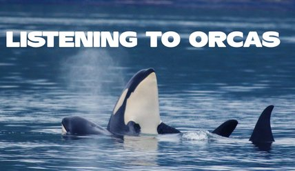 Listening to Orcas