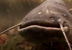 Alien Catfish
