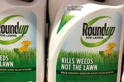 Killing Aspen: The Glyphosate Debate