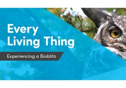 Every Living Thing: Experiencing a Bioblitz