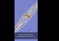 Algae in the ice and climate change