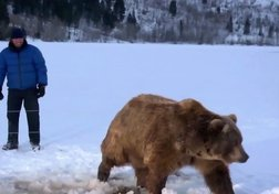 Grizzly contre ours polaire