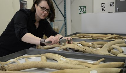 Danielle Fraser, paleontologist studying early mammals