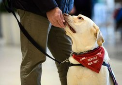 Service dogs won't get funding without a national standard