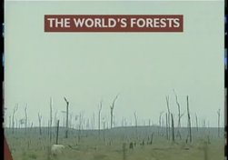 The Disappearing Forest