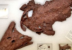The return of Tiktaalik, the fish with legs!