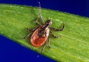 Tracking ticks to prevent rise in Lyme disease